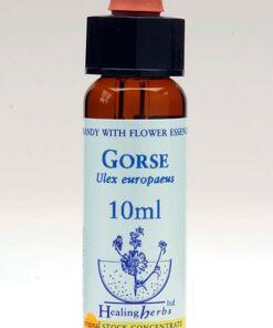 Gorse Flor de Bach Healing Herbs
