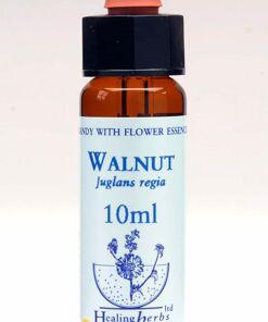 Walnut Flor de Bach Healing Herbs