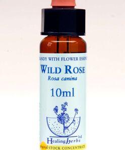 Wild Rose Flor de Bach Healing Herbs