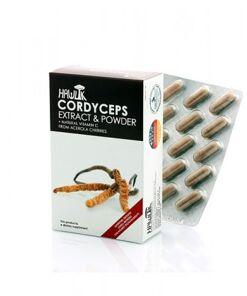 Córdiceps (Cordyceps sinensis) de Hawlik